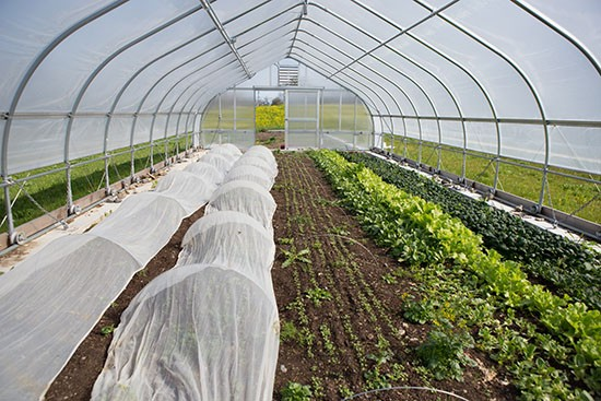 TC3 Farm hoophouse